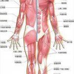 使い過ぎの筋肉と使えていない筋肉【30】